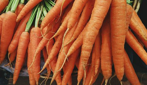 photo closeup photo of bunch of orange carrots free for commercial use images