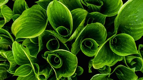 photo closeup photo of green leafed plants free for commercial use images