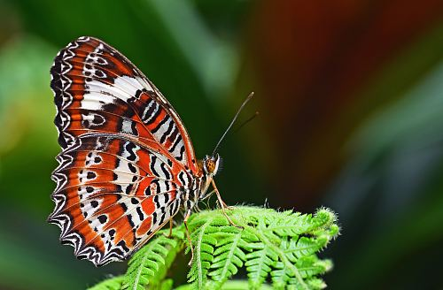 photo closeup photography of leopard lacewing butterfly perched on fern plant free for commercial use images