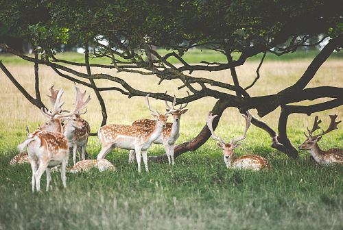 deer under tree during daytime