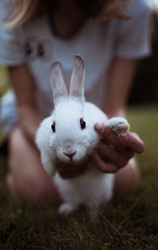 photo girl holding white rabbit free for commercial use images