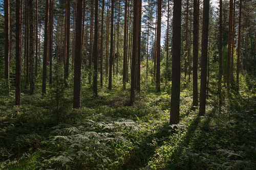 photo green forest during daytime free for commercial use images