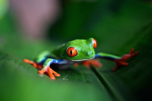 photo green frog on green leaf in selective focus photography free for commercial use images