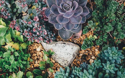 photo grey stone surrounded with succulent plants free for commercial use images