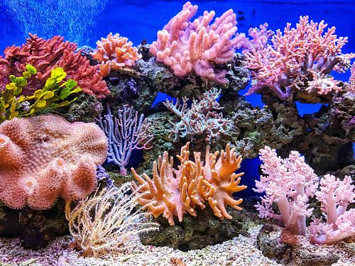 photo live corals free for commercial use images
