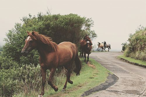 photo photo of running brown horses during daytime free for commercial use images