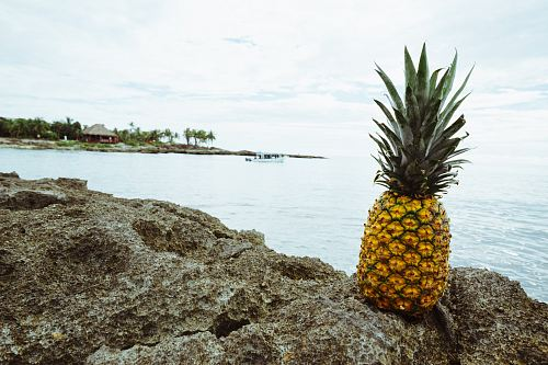 pineapple fruit on rock