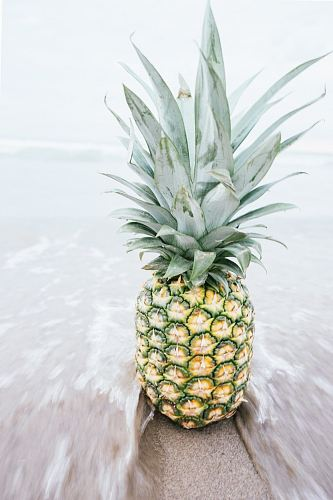 photo pineapple on shore free for commercial use images
