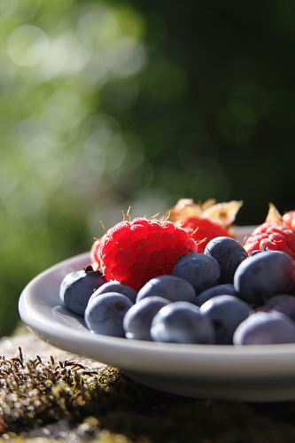 photo selective focus of blueberries and raspberries on bowl free for commercial use images