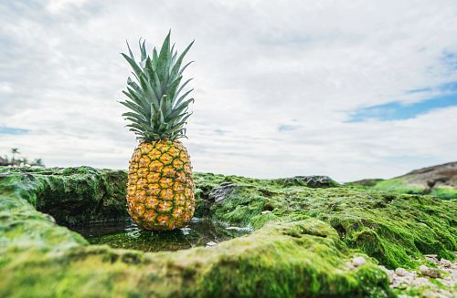 free for commercial use shallow focus photo of pineapple fruit images