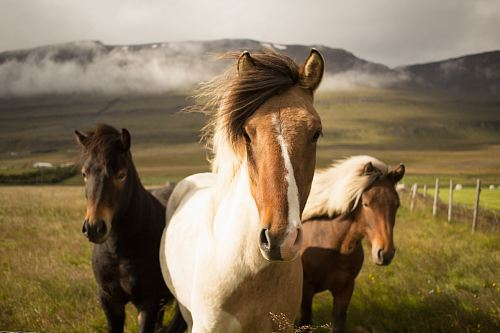 photo three assorted-color horses running away from a mountain free for commercial use images