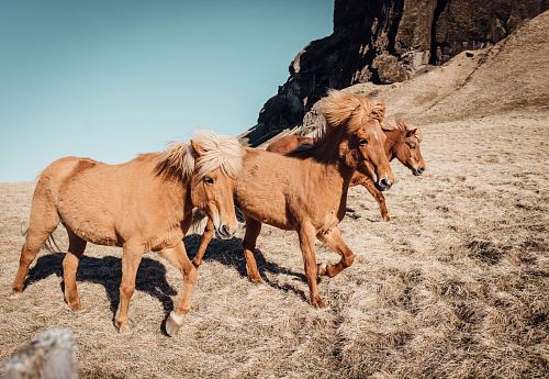 photo three tan running horses near rocky mountain during daytime free for commercial use images