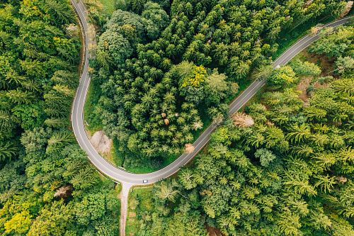 photo top view photography of pine trees and road free for commercial use images