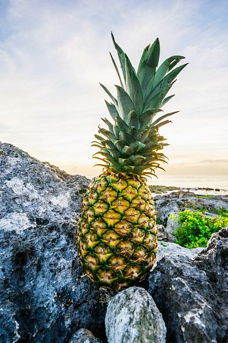 yellow pineapple fruit on grey stones