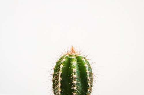 plant closeup photo of cactus against white background flora