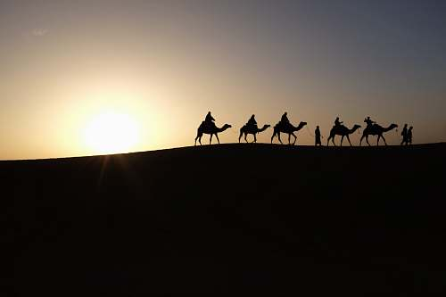 desert silhouette of people riding on camels silhouette