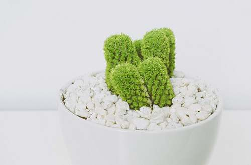 green cactus plant potted plant