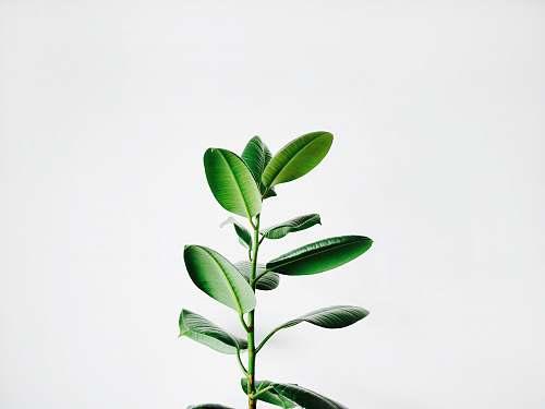 nature green leaf plant white