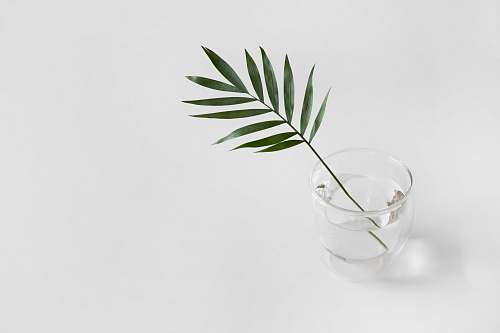 leaf green linear plant in clear drinking glass minimal