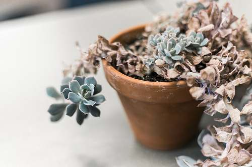 planter green succulent plant pot