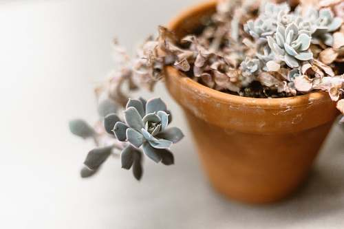 pot pot of succulent plant food