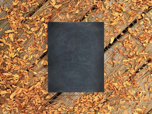 fall chalkboard on wooden surface with fallen leaves autumn
