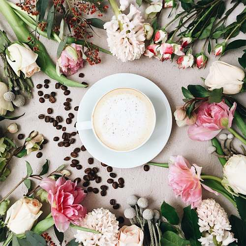potted plant cappuccino filled white ceramic coffee cup on white ceramic saucer surrounded by assorted-type of flowers and coffee beans pottery