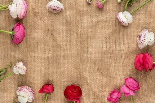 rose white and pink flowers on brown textile blossom