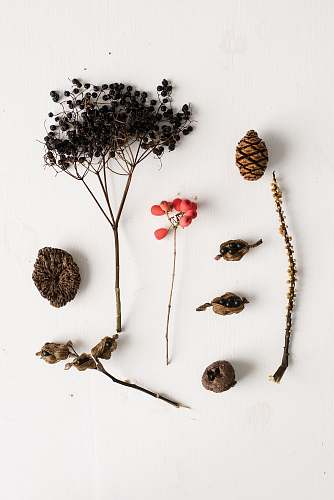 person pine cone and dried pepper seeds people