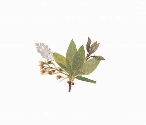 flora white, green, and brown petaled flowers leaf