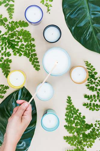 sydney candles near green plants australia