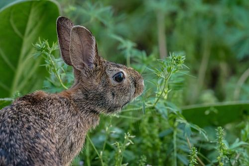 a hare next to some leaves