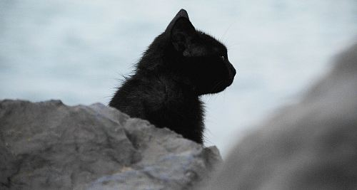 black cat behind stone