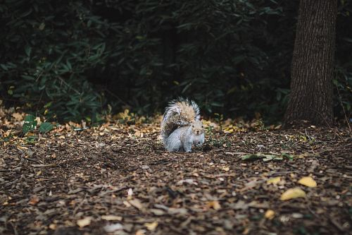 brown squirrel standing on soil