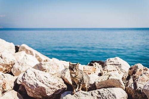 photo brown tabby cat standing on rocks free for commercial use images