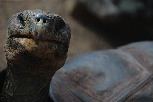 brown tortoise in shallow focus photography