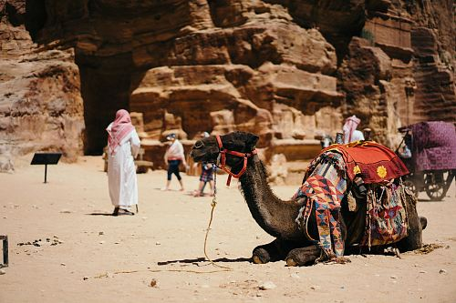 photo camel sitting on ground near people and rocks free for commercial use images