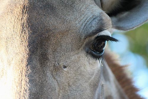 photo close up photo of horse right eye free for commercial use images