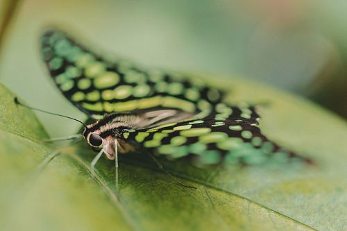 free for commercial use close up photography of butterfly perching on green leaf images