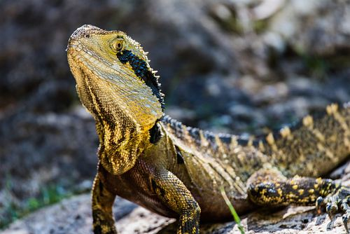 closeup photography of yellow and black lizard