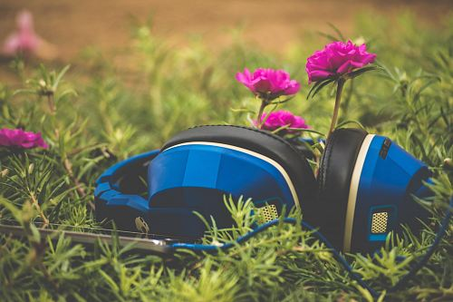 photo focus photography of blue headphones on grass free for commercial use images