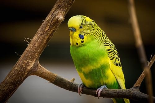 photo green and yellow bird standing on tree branch free for commercial use images