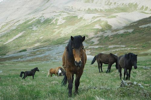 photo herd of horses on mountain free for commercial use images