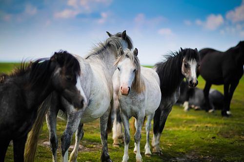 herd of horses standing on grass
