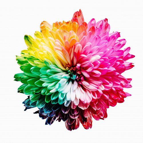 photo multicolored flower illustration free for commercial use images
