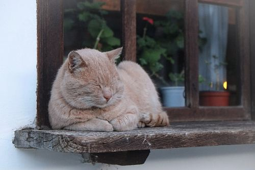 orange cat lying on brown wooden window