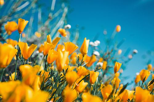 orange petaled flowers
