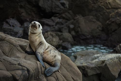 photo of brown seal standing on rock formation
