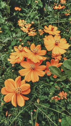 photo of fully bloomed orange petaled flower plant