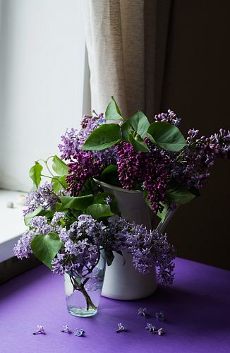 photo purple flower with green leafed on table free for commercial use images